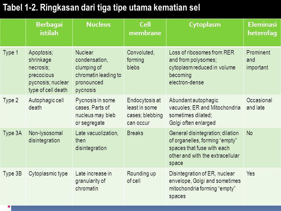 Tabel 1-2. Ringkasan dari tiga tipe utama kematian sel Berbagai istilah NucleusCell membrane CytoplasmEleminasi heterofag Type 1Apoptosis; shrinkage n