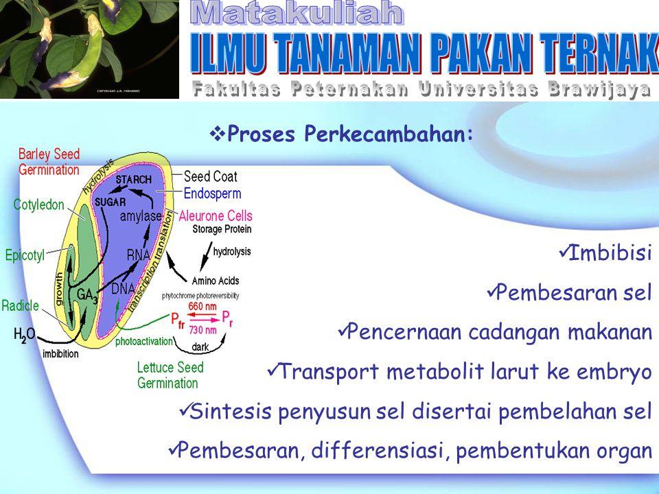  Proses Perkecambahan: Imbibisi Pembesaran sel Pencernaan cadangan makanan Transport metabolit larut ke embryo Sintesis penyusun sel disertai pembela