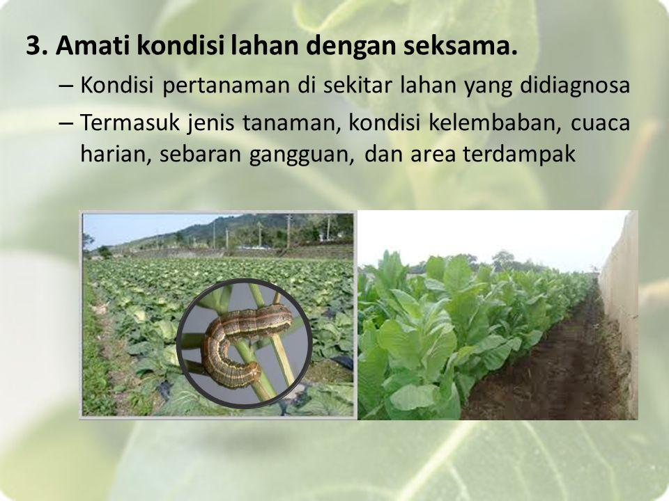 3. Amati kondisi lahan dengan seksama. – Kondisi pertanaman di sekitar lahan yang didiagnosa – Termasuk jenis tanaman, kondisi kelembaban, cuaca haria