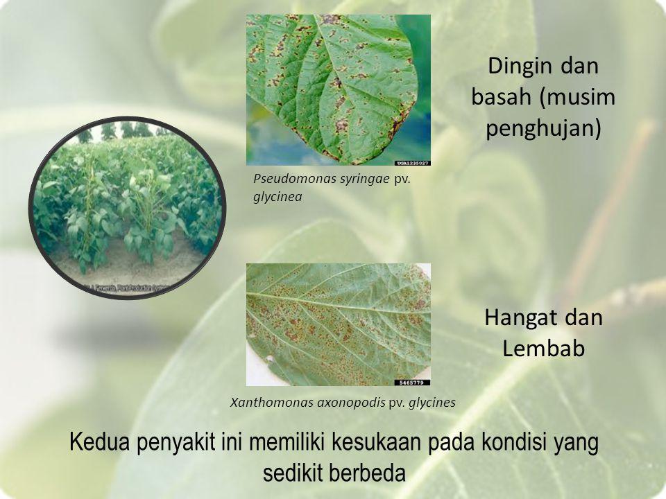 Xanthomonas axonopodis pv. glycines Pseudomonas syringae pv. glycinea Hangat dan Lembab Dingin dan basah (musim penghujan) Kedua penyakit ini memiliki