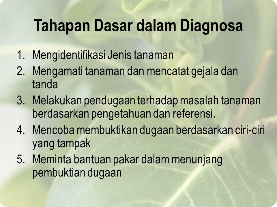 Tahapan Dasar dalam Diagnosa 1.Mengidentifikasi Jenis tanaman 2.Mengamati tanaman dan mencatat gejala dan tanda 3.Melakukan pendugaan terhadap masalah