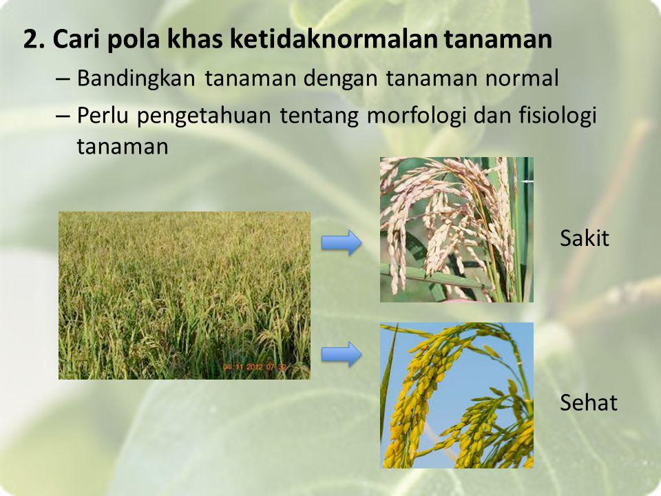 2. Cari pola khas ketidaknormalan tanaman – Bandingkan tanaman dengan tanaman normal – Perlu pengetahuan tentang morfologi dan fisiologi tanaman Sakit