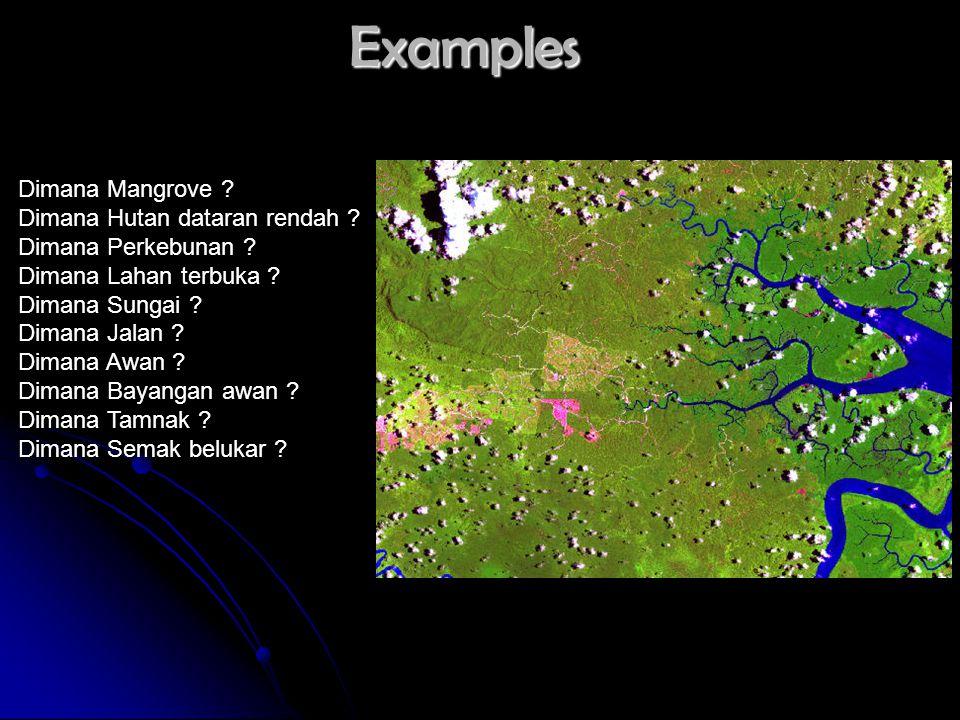 Examples Dimana Mangrove ? Dimana Hutan dataran rendah ? Dimana Perkebunan ? Dimana Lahan terbuka ? Dimana Sungai ? Dimana Jalan ? Dimana Awan ? Diman