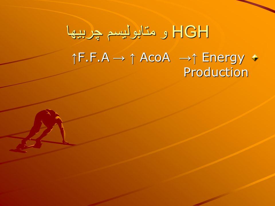 HGH و متابوليسم چربيها ↑ F.F.A → ↑ AcoA →↑ Energy Production