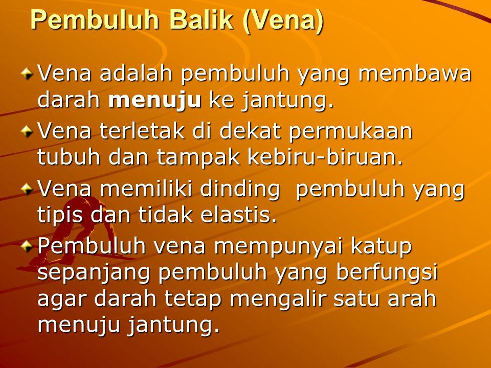 Pembuluh Balik (Vena) Vena adalah pembuluh yang membawa darah menuju ke jantung.