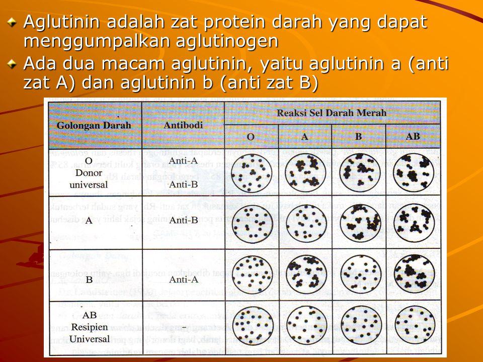 Aglutinin adalah zat protein darah yang dapat menggumpalkan aglutinogen Ada dua macam aglutinin, yaitu aglutinin a (anti zat A) dan aglutinin b (anti zat B)