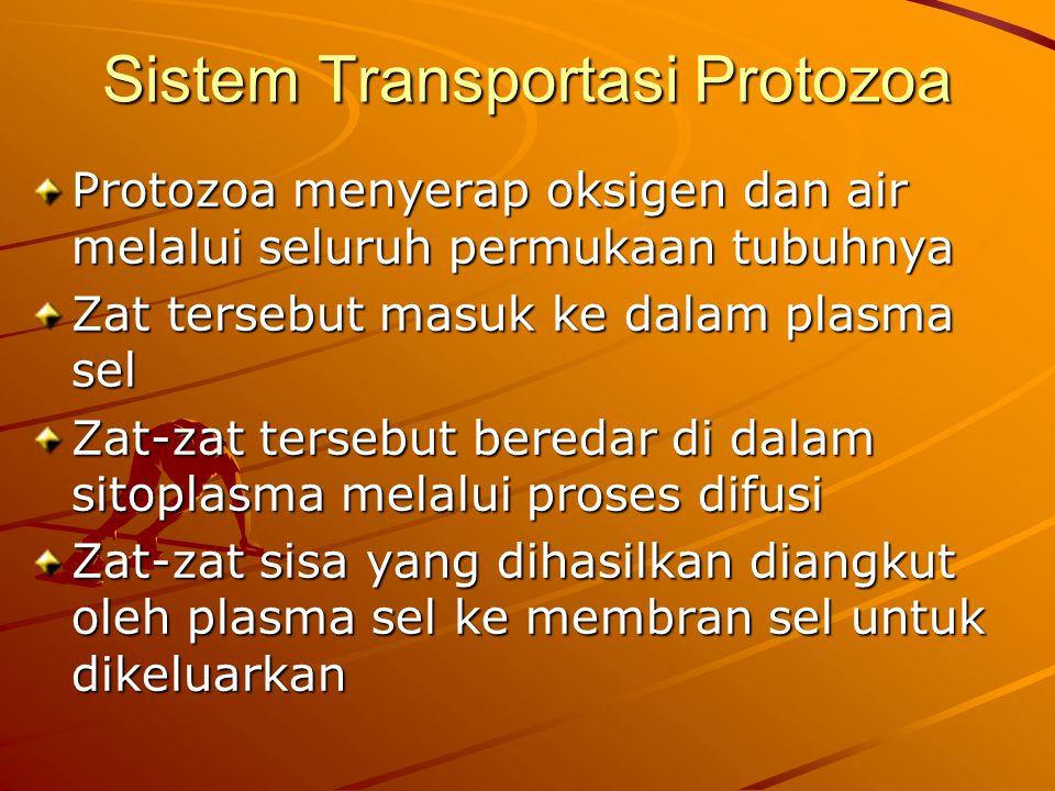 Sistem Transportasi Protozoa Protozoa menyerap oksigen dan air melalui seluruh permukaan tubuhnya Zat tersebut masuk ke dalam plasma sel Zat-zat tersebut beredar di dalam sitoplasma melalui proses difusi Zat-zat sisa yang dihasilkan diangkut oleh plasma sel ke membran sel untuk dikeluarkan