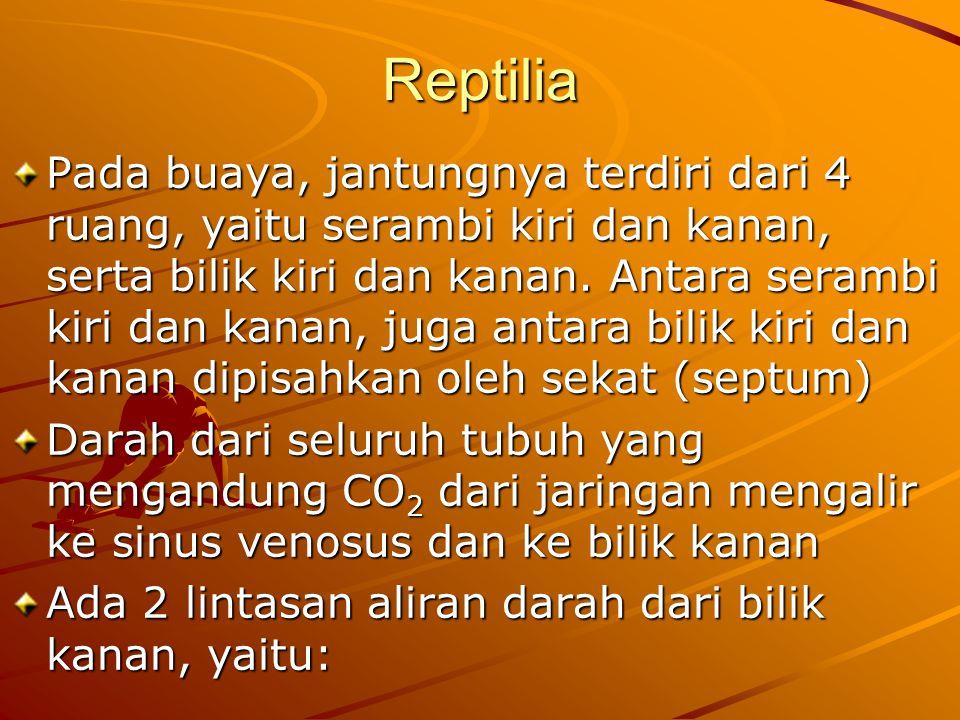 Reptilia Pada buaya, jantungnya terdiri dari 4 ruang, yaitu serambi kiri dan kanan, serta bilik kiri dan kanan.