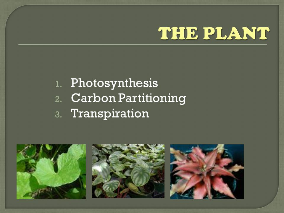 1. Photosynthesis 2. Carbon Partitioning 3. Transpiration