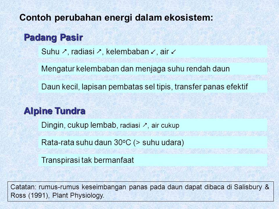 Contoh perubahan energi dalam ekosistem: Padang Pasir Suhu , radiasi , kelembaban , air  Mengatur kelembaban dan menjaga suhu rendah daun Daun kec