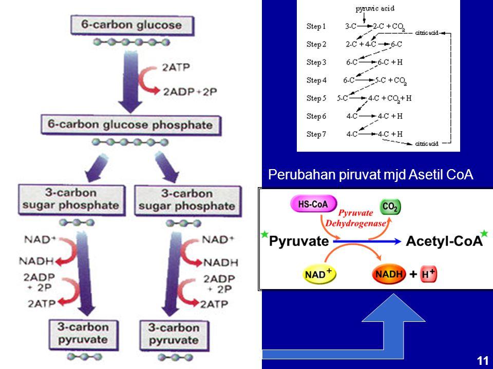 Perubahan piruvat mjd Asetil CoA 11
