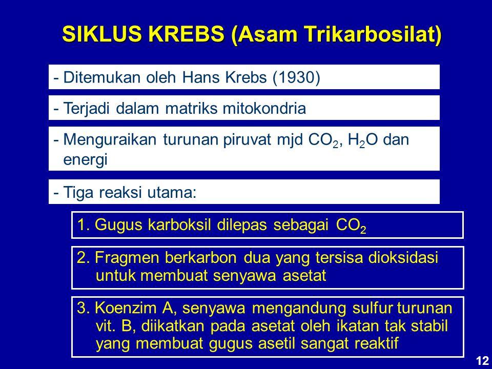 SIKLUS KREBS (Asam Trikarbosilat) - Ditemukan oleh Hans Krebs (1930) - Terjadi dalam matriks mitokondria - Menguraikan turunan piruvat mjd CO 2, H 2 O