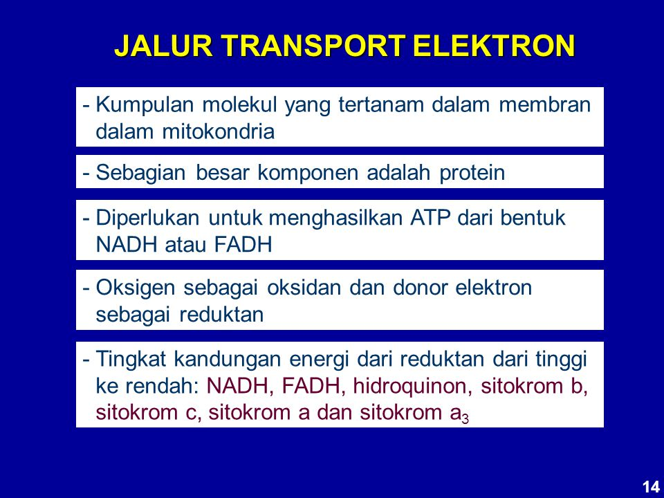 JALUR TRANSPORT ELEKTRON - Kumpulan molekul yang tertanam dalam membran dalam mitokondria - Sebagian besar komponen adalah protein - Diperlukan untuk