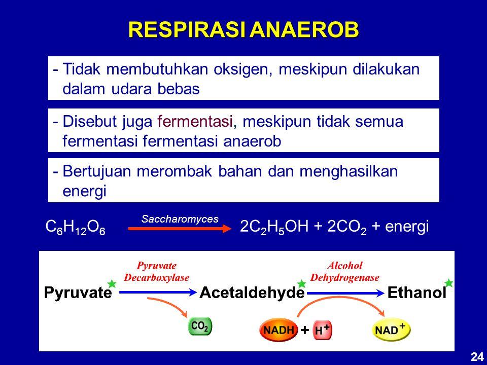 RESPIRASI ANAEROB - Tidak membutuhkan oksigen, meskipun dilakukan dalam udara bebas - Disebut juga fermentasi, meskipun tidak semua fermentasi ferment