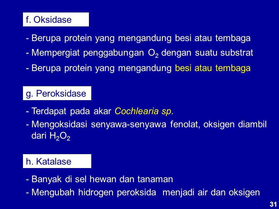 31 f. Oksidase - Berupa protein yang mengandung besi atau tembaga - Mempergiat penggabungan O 2 dengan suatu substrat - Berupa protein yang mengandung