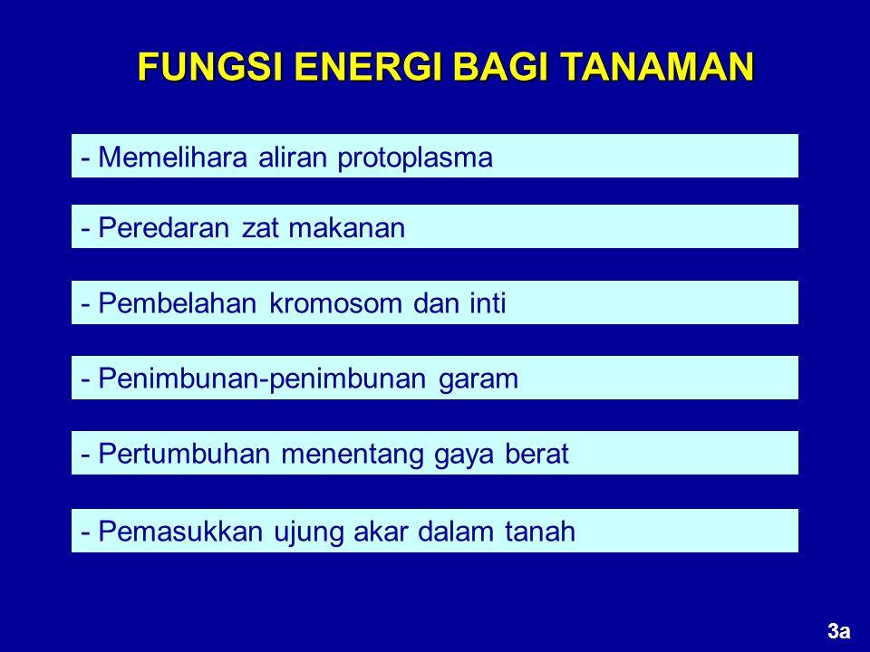 RESPIRASI ANAEROB - Tidak membutuhkan oksigen, meskipun dilakukan dalam udara bebas - Disebut juga fermentasi, meskipun tidak semua fermentasi fermentasi anaerob - Bertujuan merombak bahan dan menghasilkan energi C 6 H 12 O 6 2C 2 H 5 OH + 2CO 2 + energi Saccharomyces 24