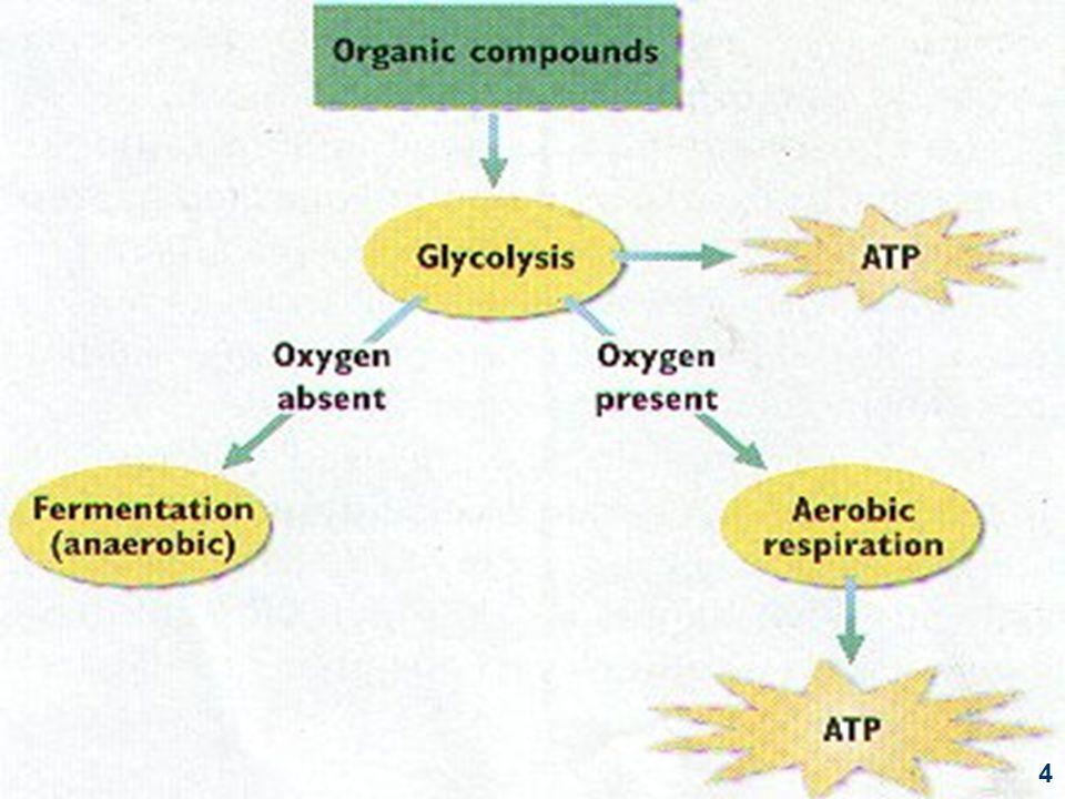 Bahan yang dapat difermentasi oleh ragi: - glukosa - fruktosa - galaktosa - manosa - sukrosa - maltosa Diubah dulu menjadi monosakarida Respirasi anaerobrespirasi intra-molekul CH 3 CH 2 OH + O 2 CH 3 COOH + H 2 O + 116 kal bakteri asam cuka C6H12O6 2CH3CHOH.COOH + 28 kal bakteri asam susu 25