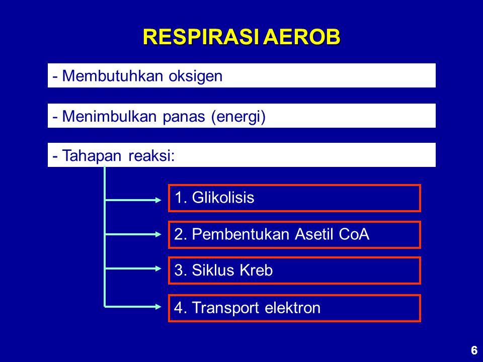 RESPIRASI AEROB - Membutuhkan oksigen - Menimbulkan panas (energi) - Tahapan reaksi: 1. Glikolisis 2. Pembentukan Asetil CoA 3. Siklus Kreb 4. Transpo
