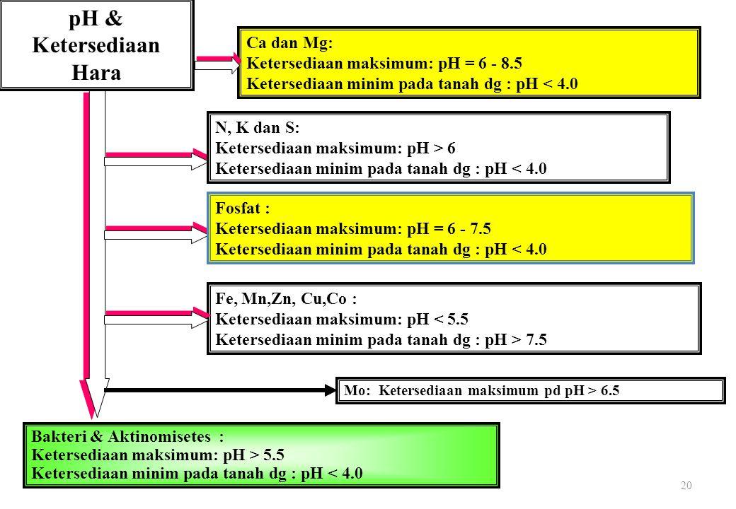 20 pH & Ketersediaan Hara Ca dan Mg: Ketersediaan maksimum: pH = 6 - 8.5 Ketersediaan minim pada tanah dg : pH < 4.0 N, K dan S: Ketersediaan maksimum: pH > 6 Ketersediaan minim pada tanah dg : pH < 4.0 Fosfat : Ketersediaan maksimum: pH = 6 - 7.5 Ketersediaan minim pada tanah dg : pH < 4.0 Fe, Mn,Zn, Cu,Co : Ketersediaan maksimum: pH < 5.5 Ketersediaan minim pada tanah dg : pH > 7.5 Bakteri & Aktinomisetes : Ketersediaan maksimum: pH > 5.5 Ketersediaan minim pada tanah dg : pH < 4.0 Mo: Ketersediaan maksimum pd pH > 6.5