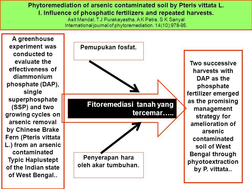Pemupukan fosfat.Penyerapan hara oleh akar tumbuhan.