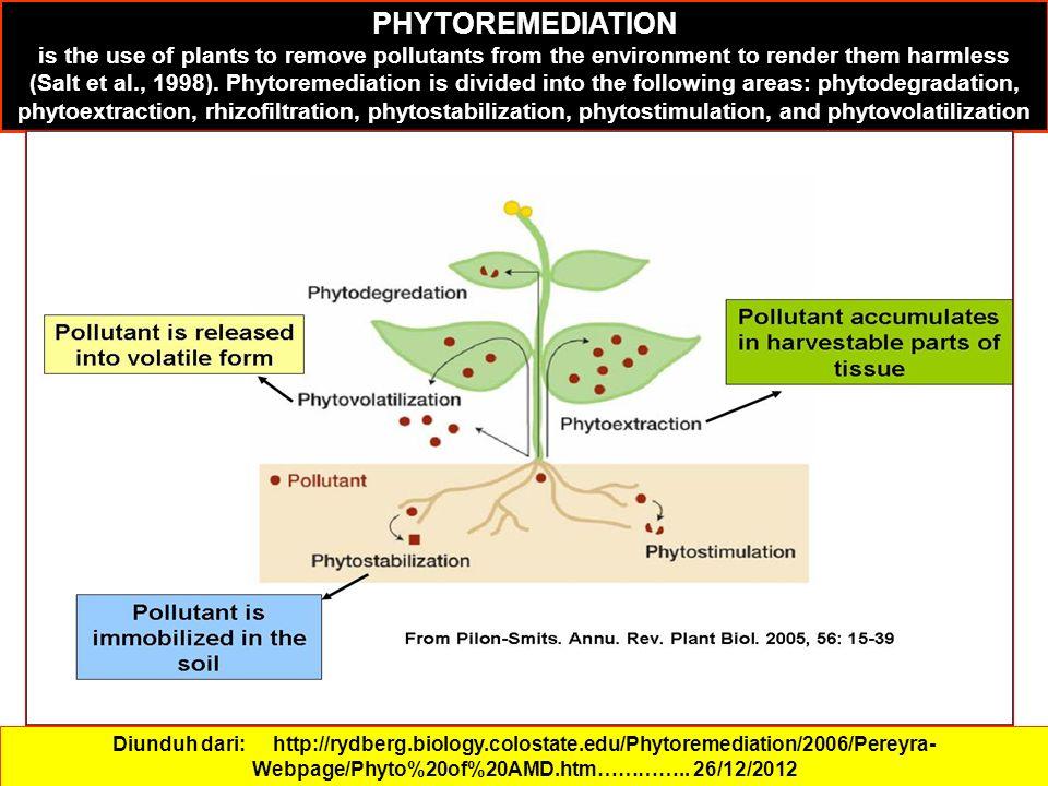 Diunduh dari: http://rydberg.biology.colostate.edu/Phytoremediation/2006/Pereyra- Webpage/Phyto%20of%20AMD.htm…………..