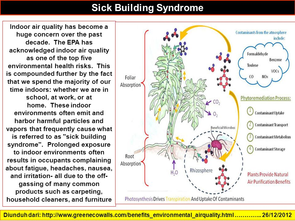 Diunduh dari: http://www.greenecowalls.com/benefits_environmental_airquality.html ………….. 26/12/2012 Sick Building Syndrome Indoor air quality has beco