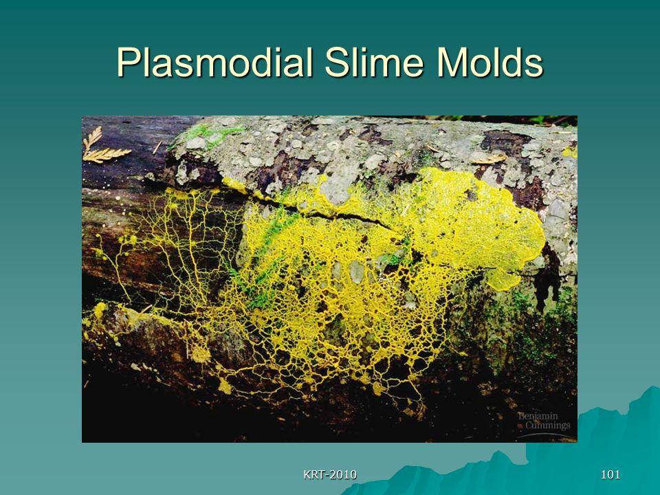 KRT-2010 101 Plasmodial Slime Molds