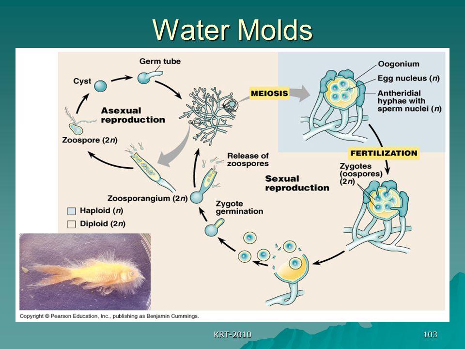 KRT-2010 103 Water Molds
