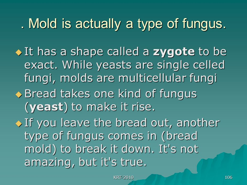 KRT-2010 106. Mold is actually a type of fungus.  It has a shape called a zygote to be exact. While yeasts are single celled fungi, molds are multice