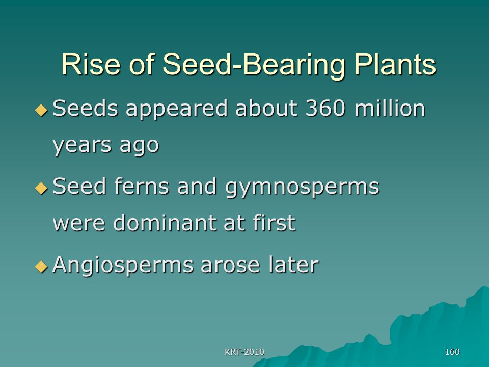 KRT-2010 160 Rise of Seed-Bearing Plants Rise of Seed-Bearing Plants  Seeds appeared about 360 million years ago  Seed ferns and gymnosperms were dominant at first  Angiosperms arose later