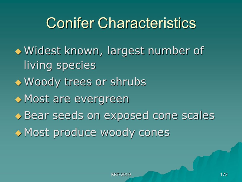 KRT-2010 172 Conifer Characteristics  Widest known, largest number of living species  Woody trees or shrubs  Most are evergreen  Bear seeds on exp