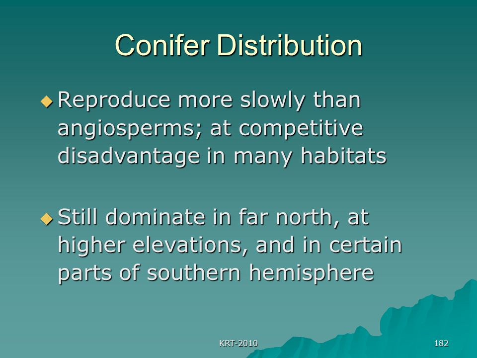 KRT-2010 182 Conifer Distribution  Reproduce more slowly than angiosperms; at competitive disadvantage in many habitats  Still dominate in far north