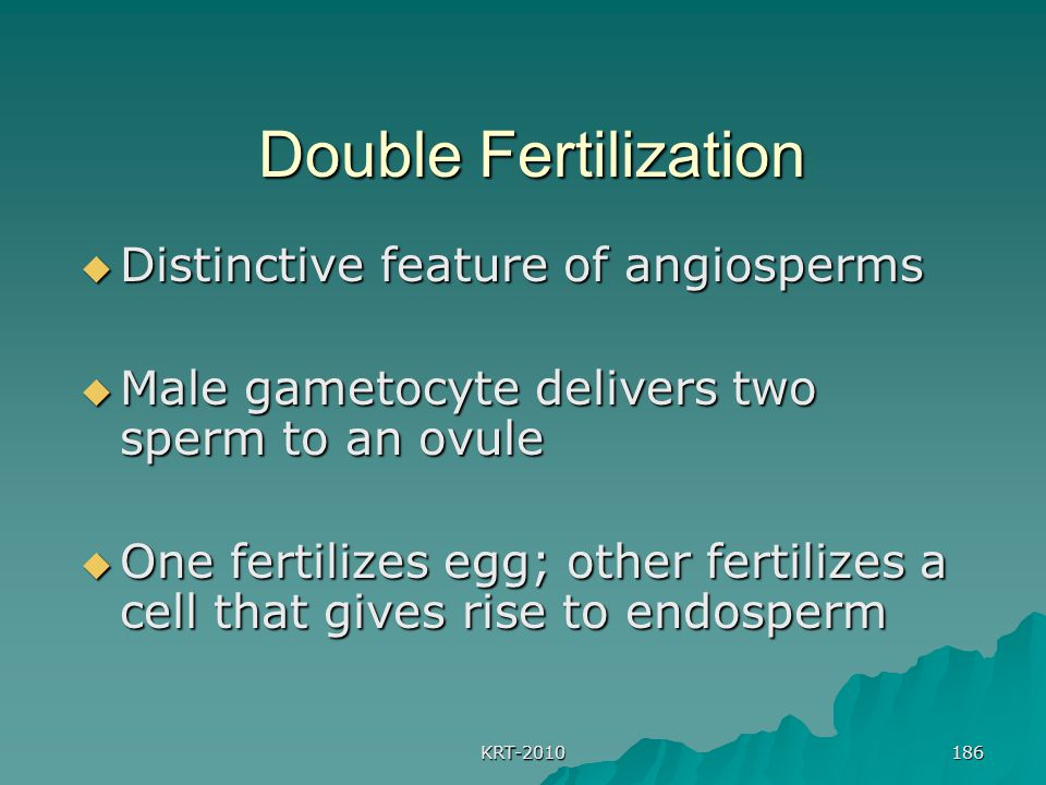 KRT-2010 186 Double Fertilization  Distinctive feature of angiosperms  Male gametocyte delivers two sperm to an ovule  One fertilizes egg; other fertilizes a cell that gives rise to endosperm
