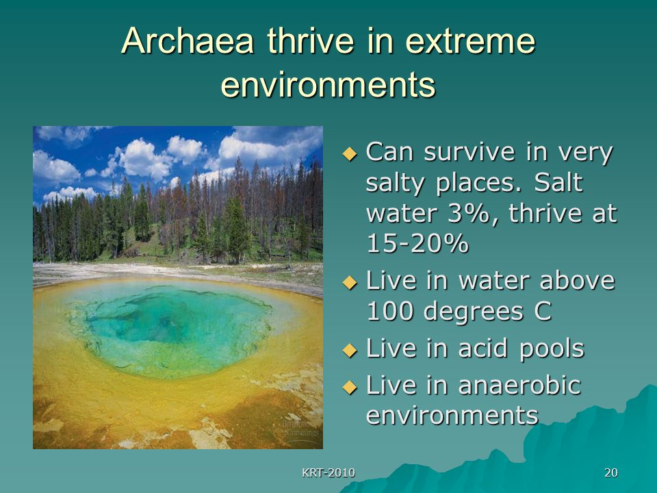 KRT-2010 20 Archaea thrive in extreme environments  Can survive in very salty places. Salt water 3%, thrive at 15-20%  Live in water above 100 degre