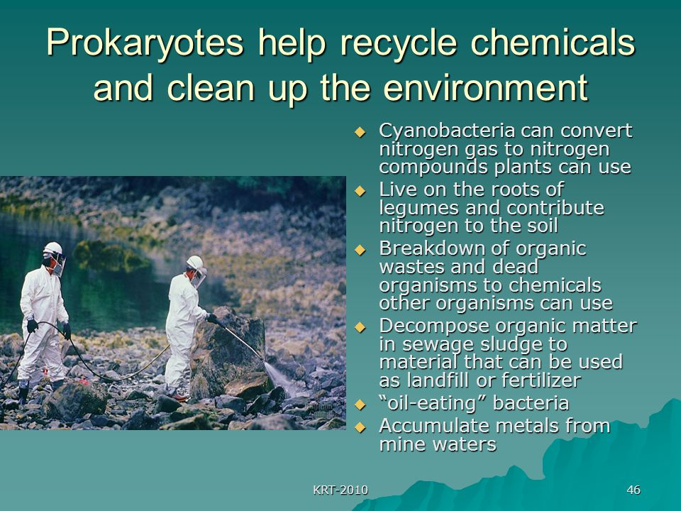 KRT-2010 46 Prokaryotes help recycle chemicals and clean up the environment  Cyanobacteria can convert nitrogen gas to nitrogen compounds plants can