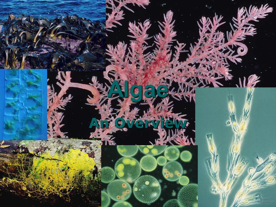 KRT-2010 62 Algae An Overview