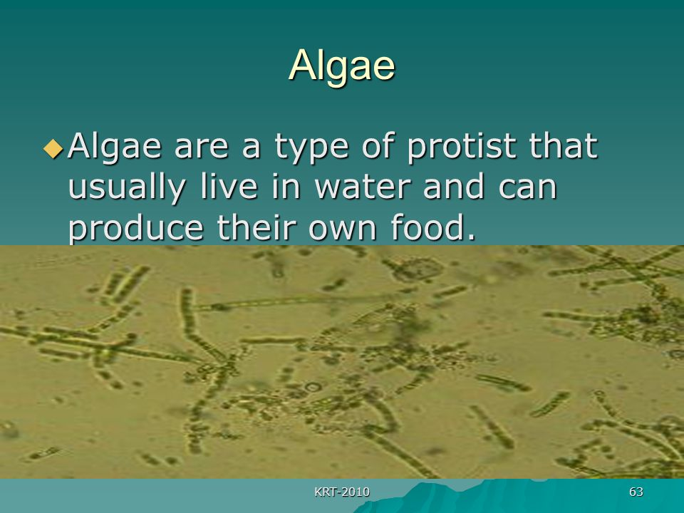 KRT-2010 63 Algae  Algae are a type of protist that usually live in water and can produce their own food.