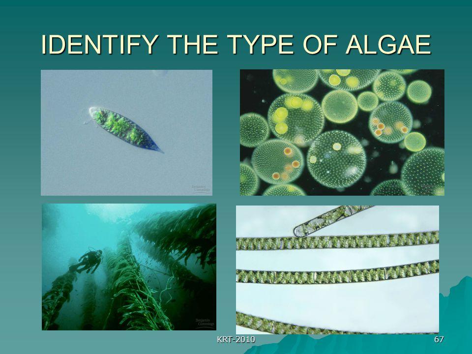 KRT-2010 67 IDENTIFY THE TYPE OF ALGAE