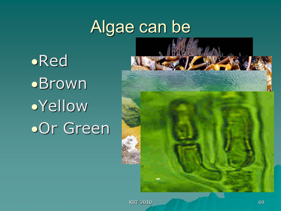 KRT-2010 69 Algae can be Red Brown Yellow Or Green