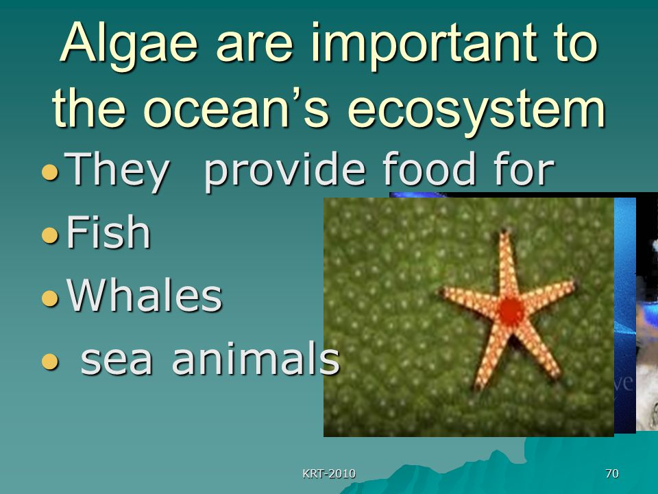 KRT-2010 70 Algae are important to the ocean's ecosystem They provide food for Fish Whales  sea animals