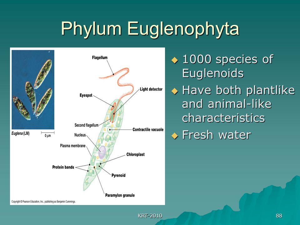 KRT-2010 88 Phylum Euglenophyta  1000 species of Euglenoids  Have both plantlike and animal-like characteristics  Fresh water