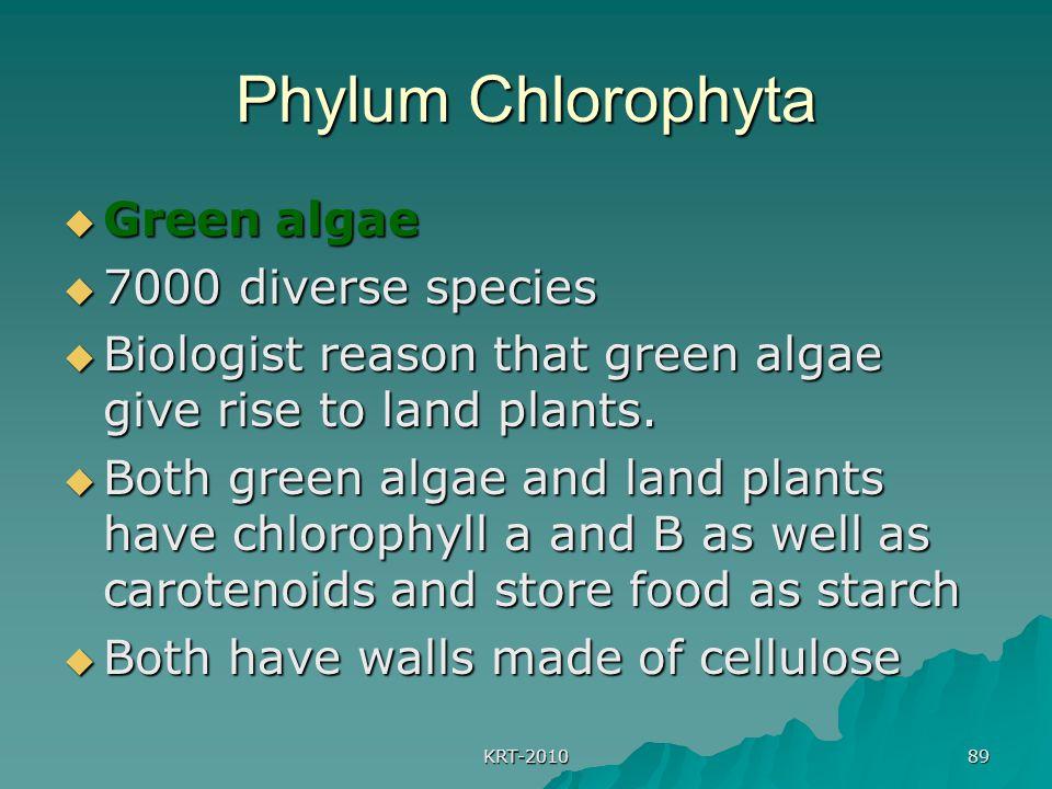 KRT-2010 89 Phylum Chlorophyta  Green algae  7000 diverse species  Biologist reason that green algae give rise to land plants.