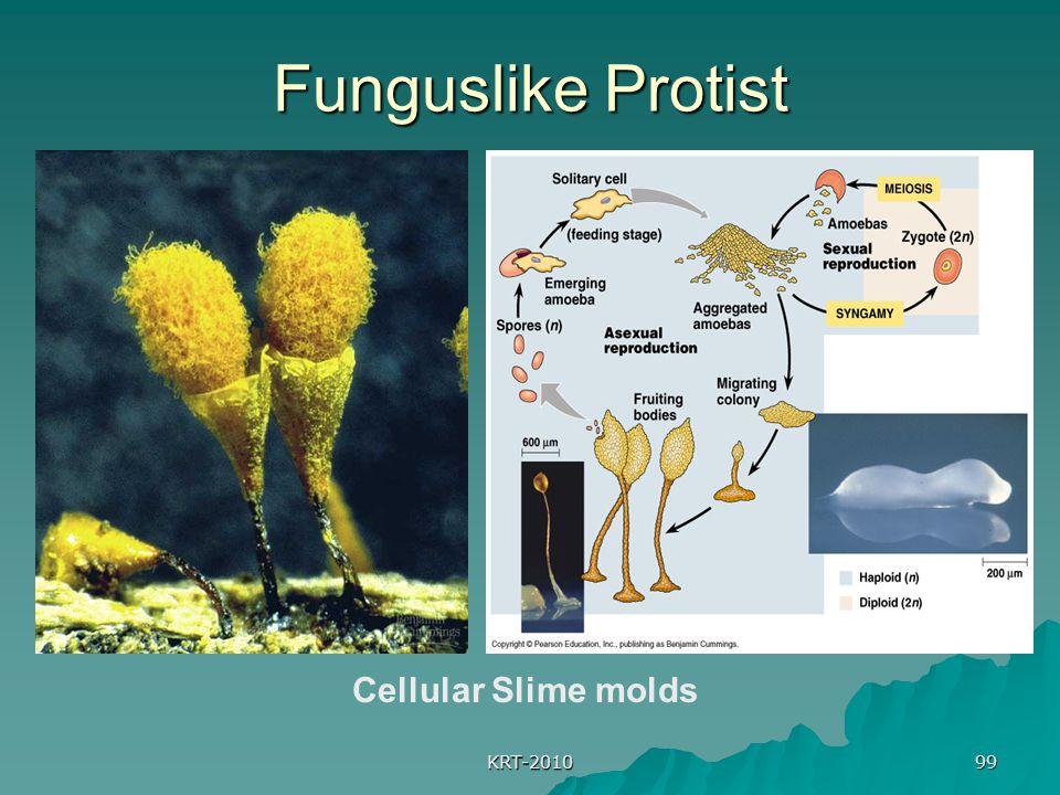 KRT-2010 99 Funguslike Protist Cellular Slime molds