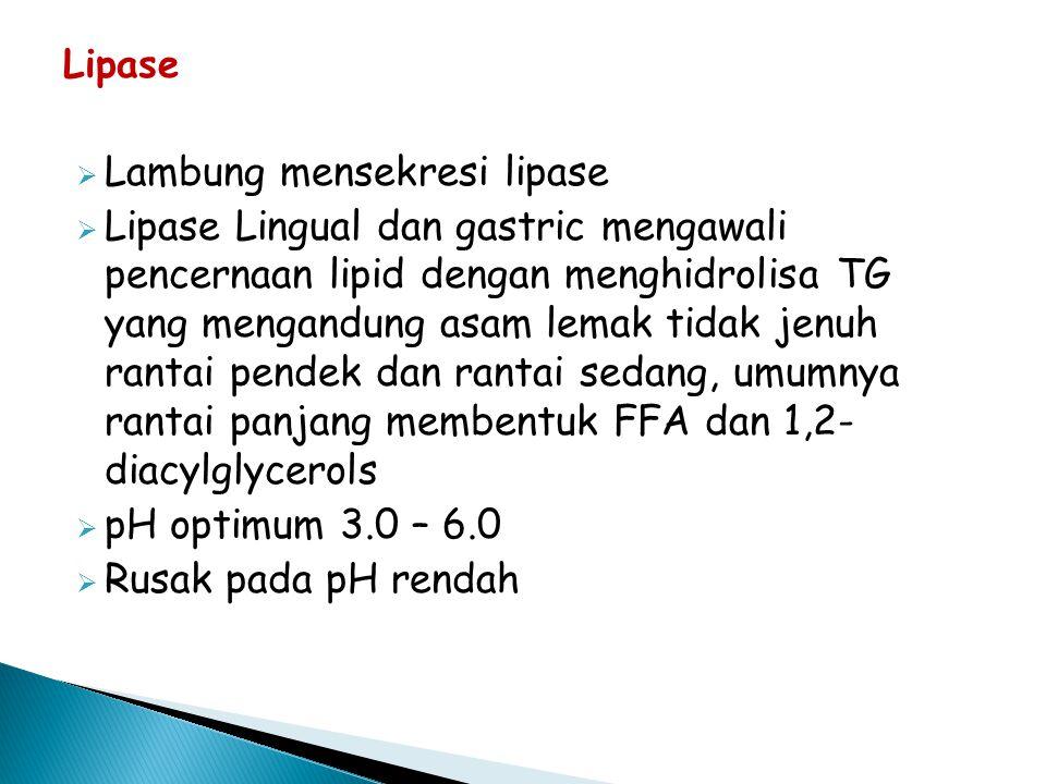 Lipase  Lambung mensekresi lipase  Lipase Lingual dan gastric mengawali pencernaan lipid dengan menghidrolisa TG yang mengandung asam lemak tidak jenuh rantai pendek dan rantai sedang, umumnya rantai panjang membentuk FFA dan 1,2- diacylglycerols  pH optimum 3.0 – 6.0  Rusak pada pH rendah