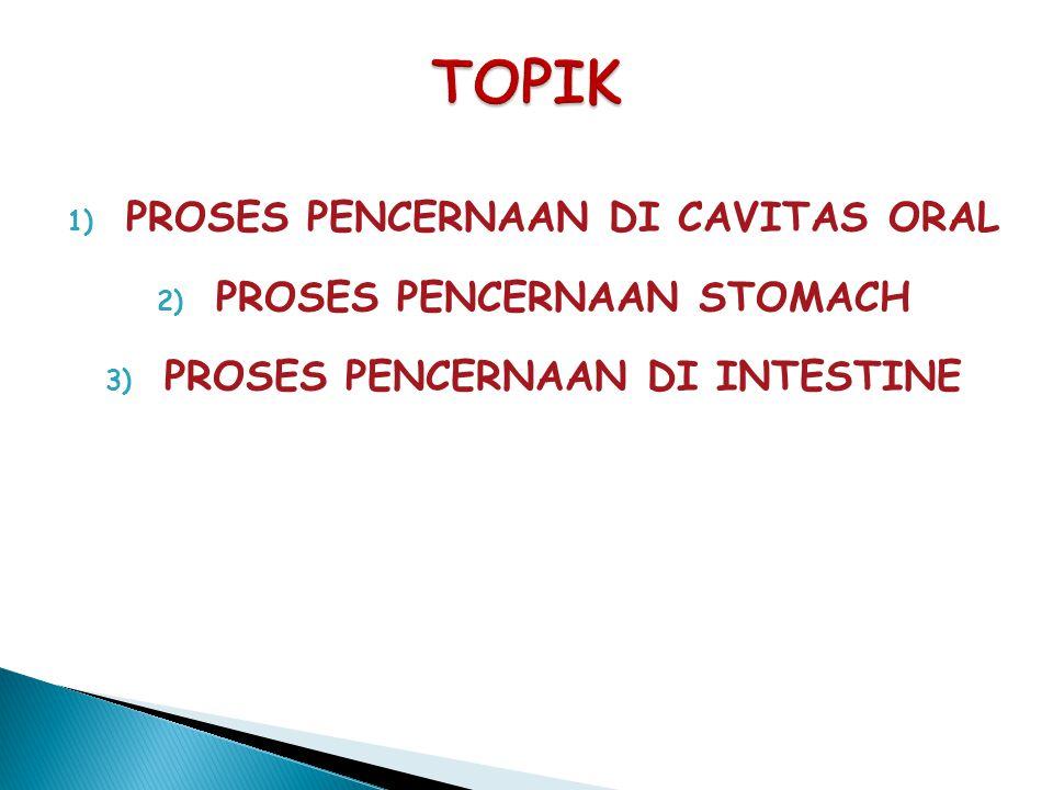 1) PROSES PENCERNAAN DI CAVITAS ORAL 2) PROSES PENCERNAAN STOMACH 3) PROSES PENCERNAAN DI INTESTINE