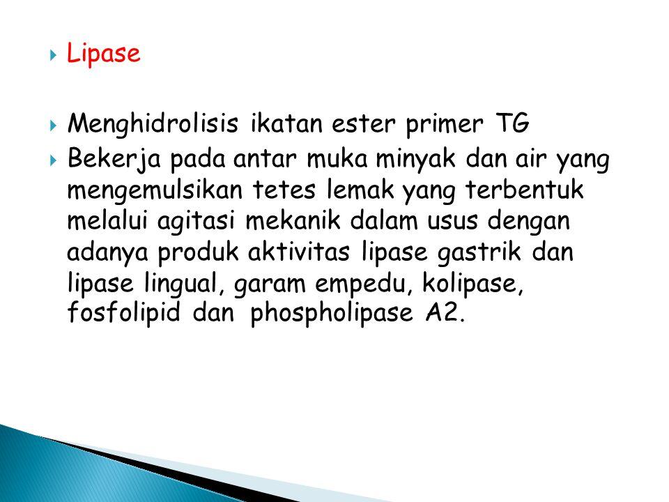  Lipase  Menghidrolisis ikatan ester primer TG  Bekerja pada antar muka minyak dan air yang mengemulsikan tetes lemak yang terbentuk melalui agitasi mekanik dalam usus dengan adanya produk aktivitas lipase gastrik dan lipase lingual, garam empedu, kolipase, fosfolipid dan phospholipase A2.