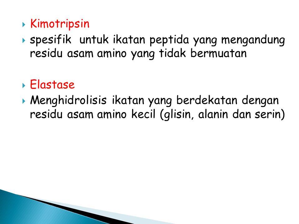  Kimotripsin  spesifik untuk ikatan peptida yang mengandung residu asam amino yang tidak bermuatan  Elastase  Menghidrolisis ikatan yang berdekatan dengan residu asam amino kecil (glisin, alanin dan serin)