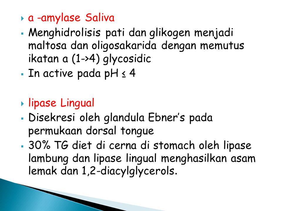  a -amylase Saliva  Menghidrolisis pati dan glikogen menjadi maltosa dan oligosakarida dengan memutus ikatan a (1->4) glycosidic  In active pada pH ≤ 4  lipase Lingual  Disekresi oleh glandula Ebner's pada permukaan dorsal tongue  30% TG diet di cerna di stomach oleh lipase lambung dan lipase lingual menghasilkan asam lemak dan 1,2-diacylglycerols.