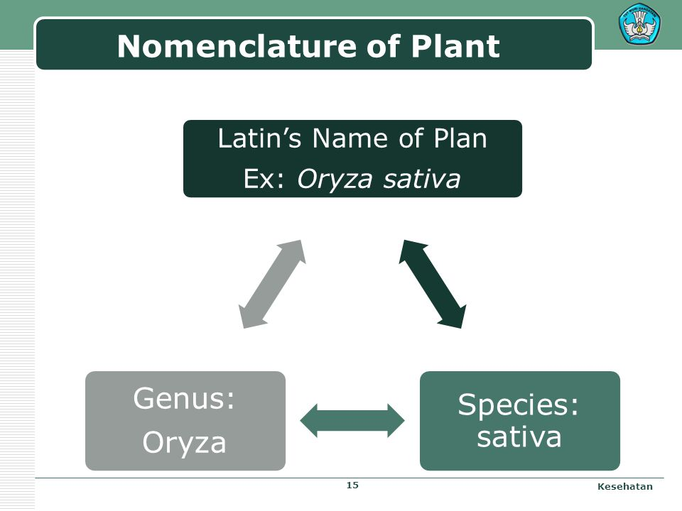Natural Substance Systematic and morphology of plants - Herbs - Animal - Mineral Systematic and Identification Natural Substance of drug - Collections