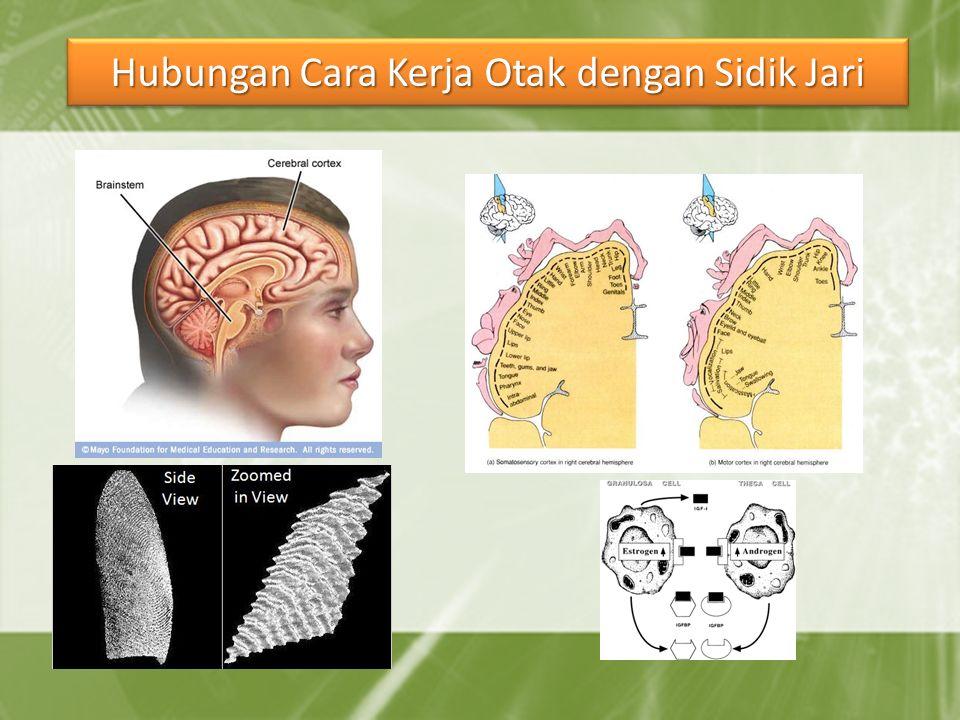 Hubungan Cara Kerja Otak dengan Sidik Jari